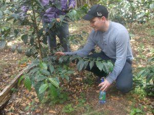 Ethiopia Coffee Plants