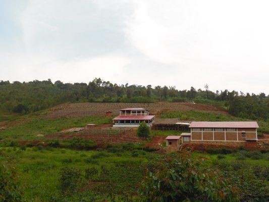 Burundi Shembata Coffee Farm