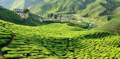 Solaris Botanical Teas